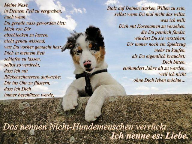 Profil: **Schmetterling** - Der beste Freund.. | spin.de